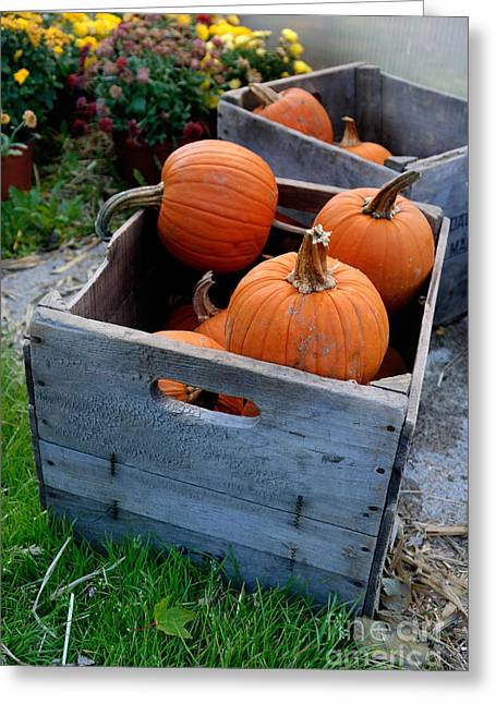 Gourds Greeting Cards - Pumpkins in Wooden Crates Greeting Card by Amy Cicconi