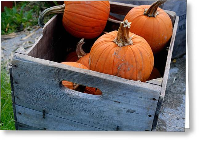 Pumpkins in Wooden Crates Greeting Card by Amy Cicconi