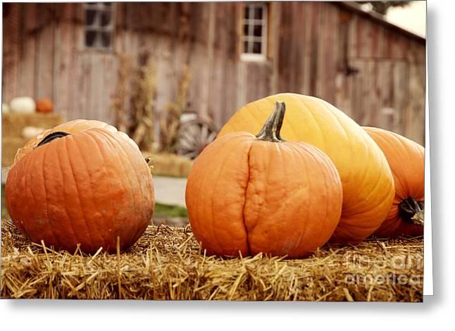 Pumpkins Greeting Card by Juli Scalzi