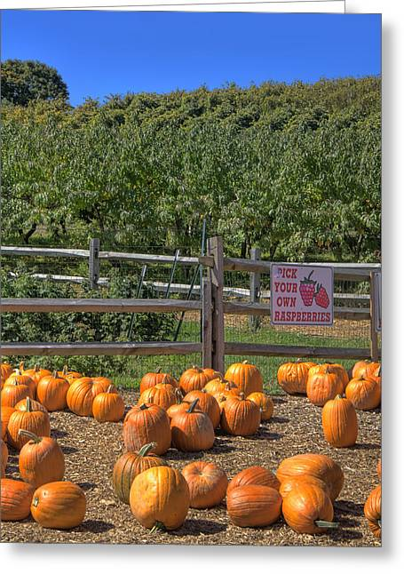 New England Farm Scene Greeting Cards - Pumpkins on the Farm Greeting Card by Joann Vitali