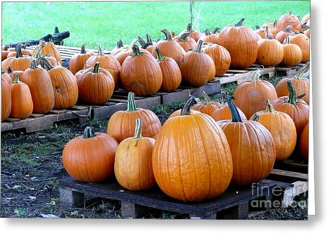Farm Stand Greeting Cards - Pumpkins Waiting Greeting Card by Betsy Cotton
