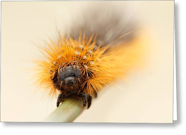 Caterpillar Greeting Cards - Punky Greeting Card by Roeselien Raimond
