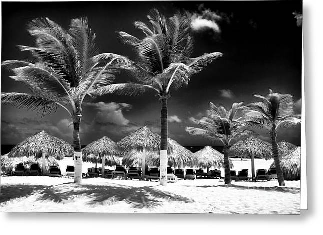 Punta Palms Greeting Card by John Rizzuto