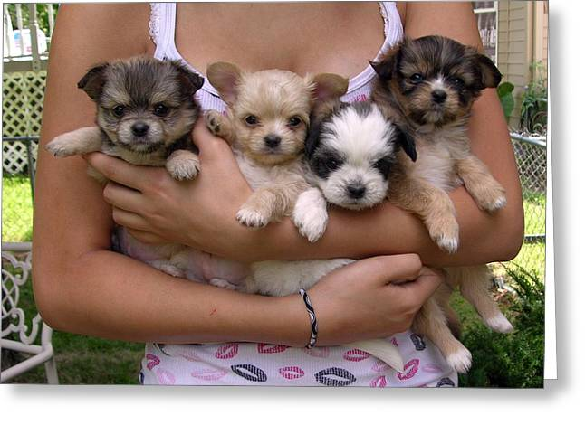Puppies Photographs Greeting Cards - Puppies in Marias arms Greeting Card by John Lautermilch