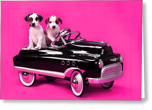 Puppies In Pedal Car On Hot Pink Greeting Card by Rebecca Brittain