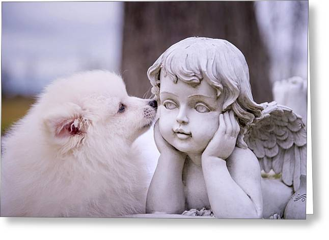 Sweetness Greeting Cards - Puppy and Angel  Greeting Card by Bonnie Barry