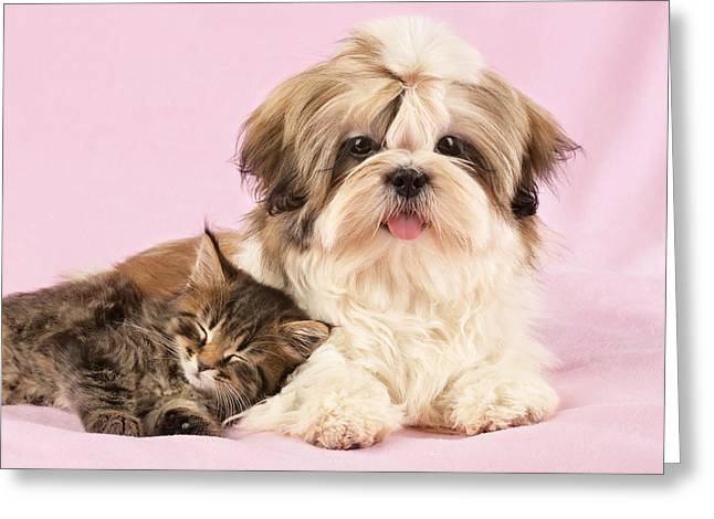 Puppies Photographs Greeting Cards - Puppy And Kitten Greeting Card by Greg Cuddiford