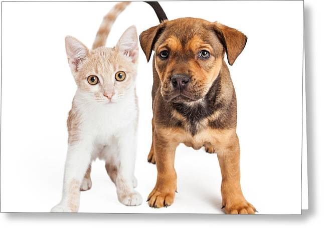 Mutt Greeting Cards - Puppy and Kitten Standing Together Greeting Card by Susan  Schmitz