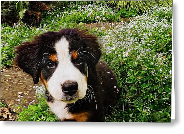 Puppy Digital Greeting Cards - Puppy Art - Little Lily Greeting Card by Jordan Blackstone