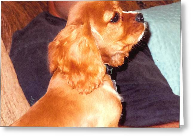 Puppy At Attention Greeting Card by Barb Baker