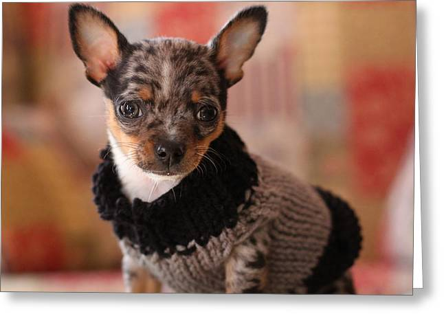 Dog Sweaters Greeting Cards - Puppy Chihuahua Greeting Card by Chihuahua Kisses