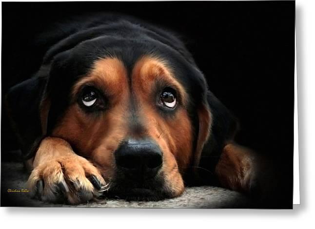 Puppy Dog Eyes Greeting Card by Christina Rollo