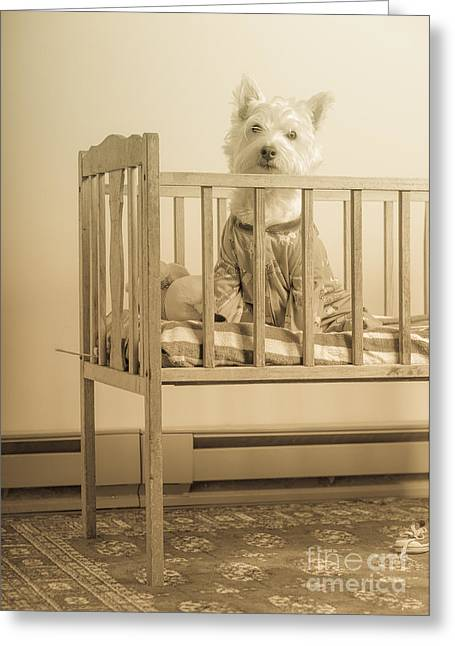 Pajamas Greeting Cards - Puppy dog in a baby crib Greeting Card by Edward Fielding