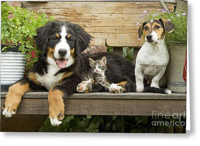 Puppy Dogs And Kitten Greeting Card by Jean-Michel Labat