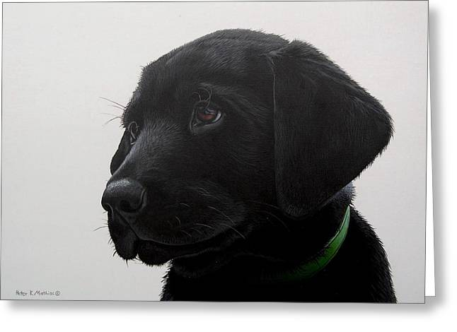 Peter Mathios Greeting Cards - Puppy Eyes Greeting Card by Peter Mathios
