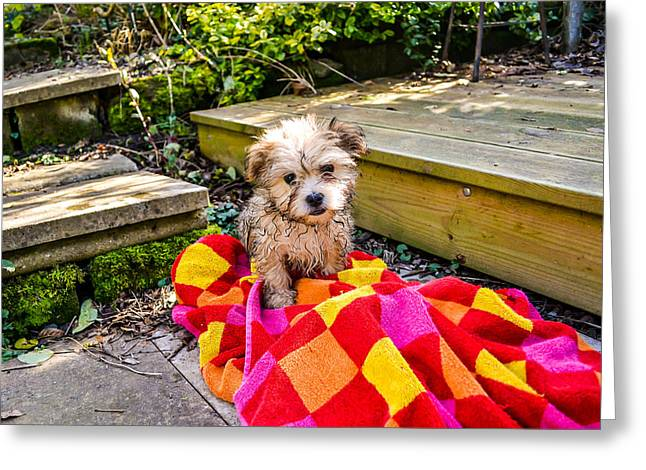 Puppies Photographs Greeting Cards - Puppy in the Pond Greeting Card by David Cresswell