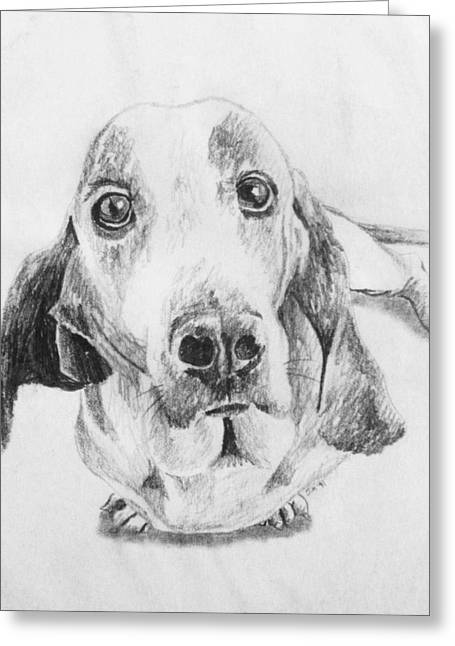 Basset Drawings Greeting Cards - Puppy Greeting Card by Jeremy Moore