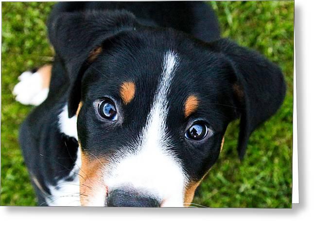 Puppy Love Greeting Card by Aaron Aldrich