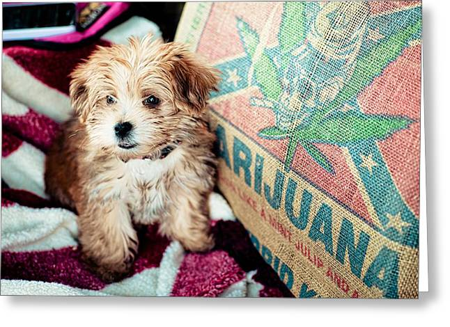 Confederate Flag Greeting Cards - Puppy Love Greeting Card by Cecilia Garay