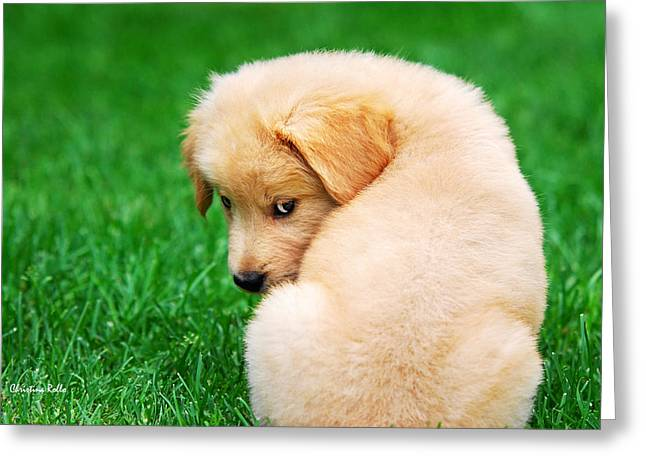 Puppy Portrait Greeting Cards - Puppy Love Greeting Card by Christina Rollo