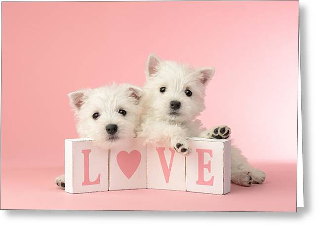 White Photographs Greeting Cards - Puppy Love Greeting Card by Greg Cuddiford