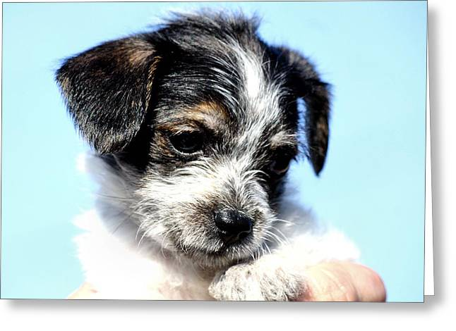 Puppies Photographs Greeting Cards - Puppy Love Greeting Card by Karen M Scovill