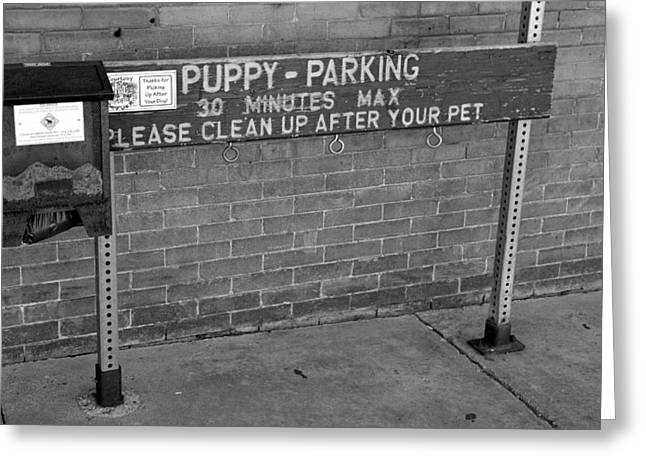 Puppies Photographs Greeting Cards - Puppy Parking Greeting Card by David Lee Thompson