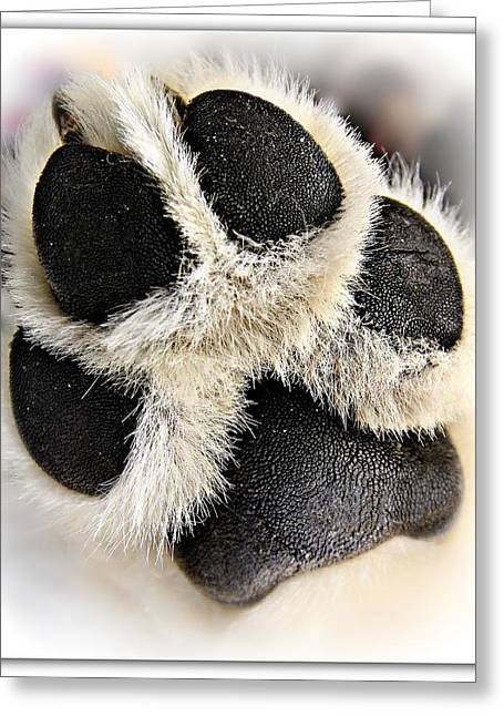 Husky Greeting Cards - Puppy Paw Greeting Card by Kimmi Craig