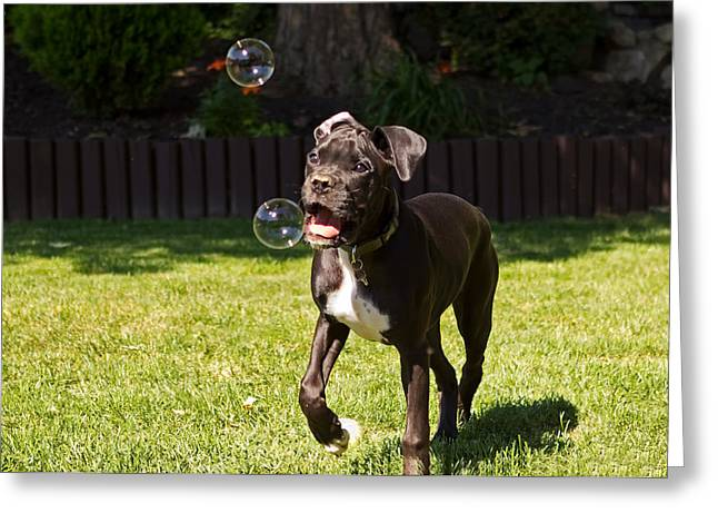 Puppy Eyes Greeting Cards - Puppy Playing with Bubbles Greeting Card by Stephanie McDowell
