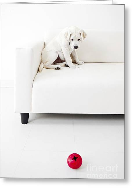 Dog Playing Ball Greeting Cards - Puppy Problems Greeting Card by Diane Diederich