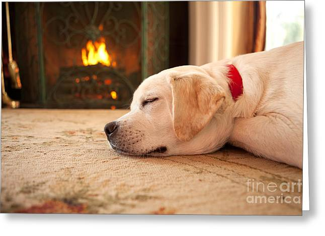 Warmth Greeting Cards - Puppy Sleeping by a Fireplace Greeting Card by Diane Diederich