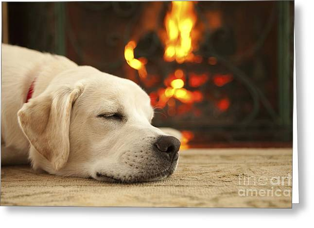 Labrador Retriever Photographs Greeting Cards - Puppy Sleeping by the Fireplace Greeting Card by Diane Diederich