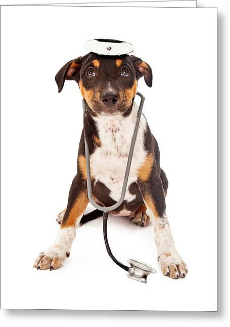Dog Photographs Greeting Cards - Puppy Veterinarian Greeting Card by Susan  Schmitz