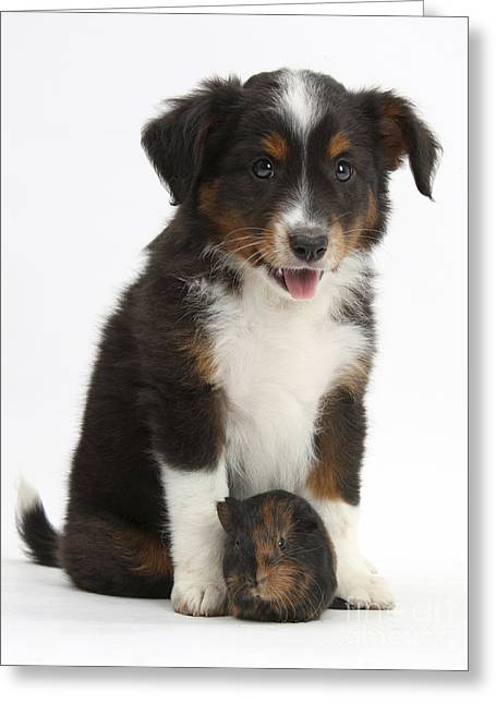 House Pet Greeting Cards - Puppy With Guinea Pig Greeting Card by Mark Taylor
