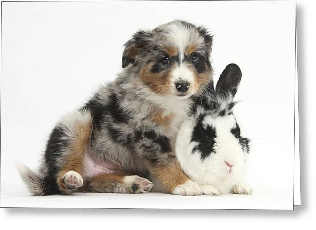 House Pet Greeting Cards - Puppy With Rabbit Greeting Card by Mark Taylor