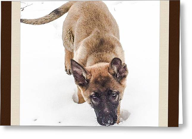 Dogs In Snow. Greeting Cards - Puppys First Snow Greeting Card by Mike Morrison