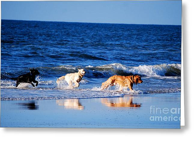 Pups On The Beach Greeting Card by Linda Mesibov