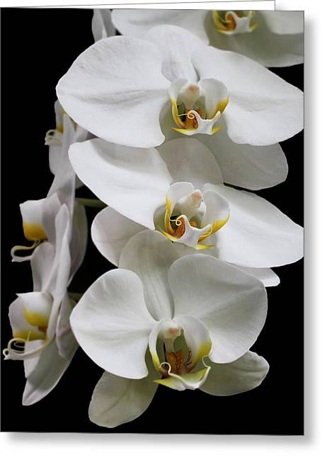 Aphrodisiac Greeting Cards - Pure Beauty Greeting Card by Judy Vincent