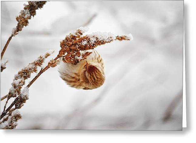 Winter In Maine Greeting Cards - Pure Bliss Greeting Card by Susan Capuano