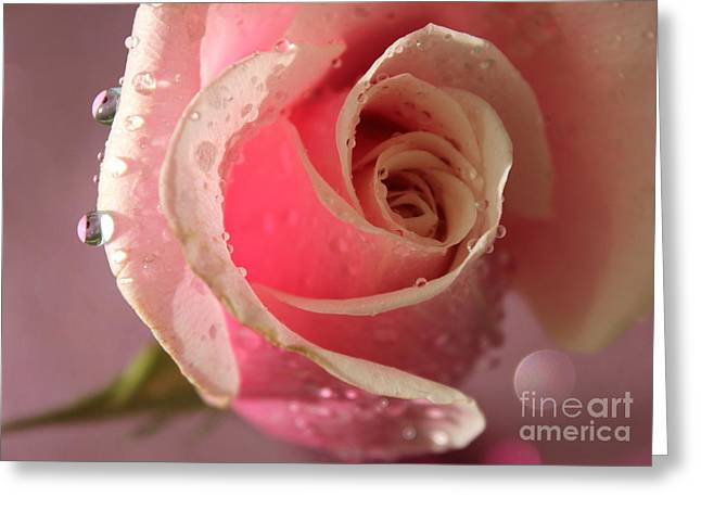 Rose Petals Greeting Cards - Pure Heart Greeting Card by Krissy Katsimbras