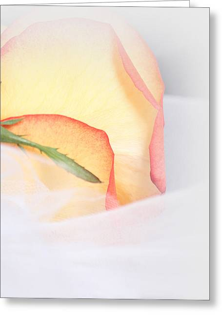 Faith Greeting Cards - Pure in Heart Greeting Card by  The Art Of Marilyn Ridoutt-Greene