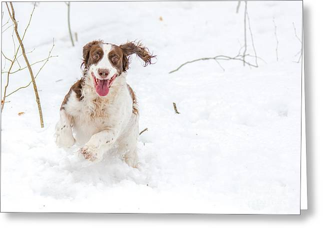The Retrieve Greeting Cards - Pure Joy Greeting Card by Cheryl Baxter