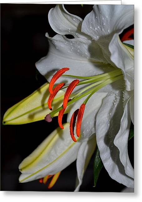 Chastity Greeting Cards - Pure Lily Greeting Card by Deena Stoddard