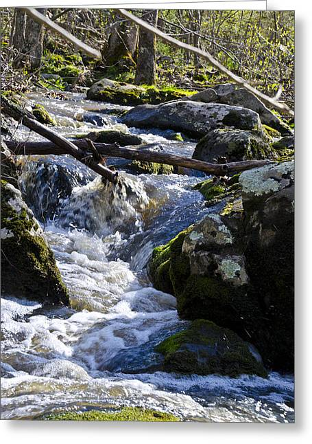 Babbling Greeting Cards - Pure Mountain Stream Greeting Card by Bill Cannon
