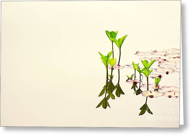 Pure Water Greeting Card by Angela Doelling AD DESIGN Photo and PhotoArt