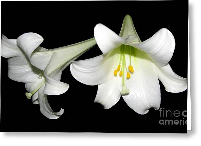 Holy Week Greeting Cards - Pure White Easter Lilies Greeting Card by Rose Santuci-Sofranko