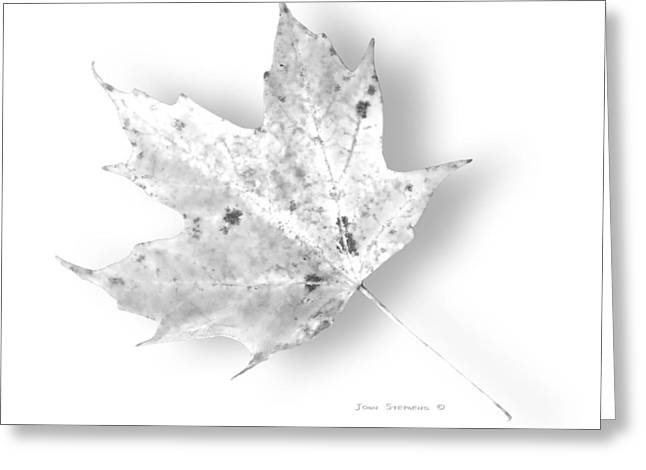Crisp Greeting Cards - Pure White Maple Leaf Greeting Card by John Stephens
