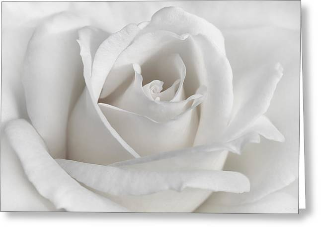 Ivory Flower Greeting Cards - Purity of a White Rose Flower Greeting Card by Jennie Marie Schell