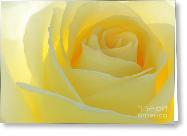 Rosette Greeting Cards - Purity Greeting Card by Sabrina L Ryan