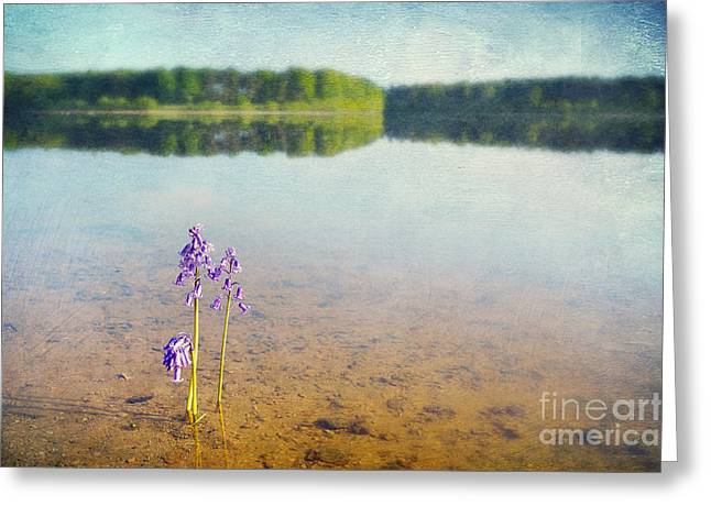 Nature Scene Digital Art Greeting Cards - Purity Greeting Card by Svetlana Sewell